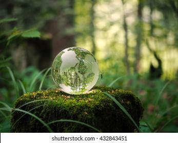 森の中の世界。苔で切り株にボール。ガラス-材料、概念とテーマ、概念、環境、自然