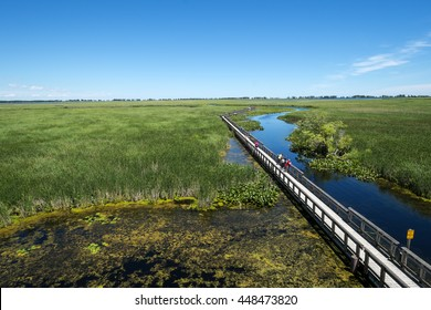 Punkt Pelee National Park Marsh Boardwalk in Kanada