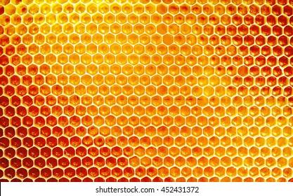 Textura de fundo e padrão de uma seção de favo de mel de uma colmeia de abelhas preenchido com mel dourado em uma visualização em tamanho cheio