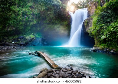 熱帯のジャングルに隠された滝