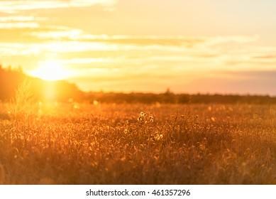 Puesta de sol en zona rural sobre el campo de trigo. Sesión de fotos a última hora de la tarde con poca profundidad de campo.