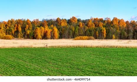 Grünes Feld mit bunten Bäumen am Horizont. Herbstlandschaft.