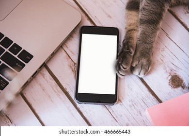 Cat paws holding a smart phone on a wood background