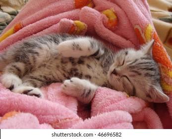 kitty sleeping
