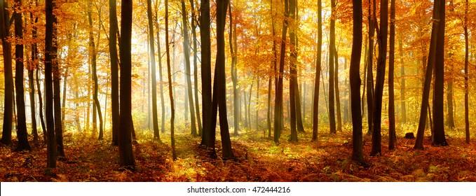 Herbst, Wald der Laubbäume, beleuchtet von Sonnenstrahlen durch Nebel, Blätter, die ihre Farbe ändern