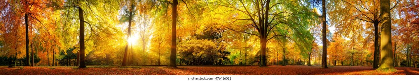 Extra weites Panorama eines wunderschönen Waldes im Herbst, eine malerische Landschaft mit angenehm warmem Sonnenschein