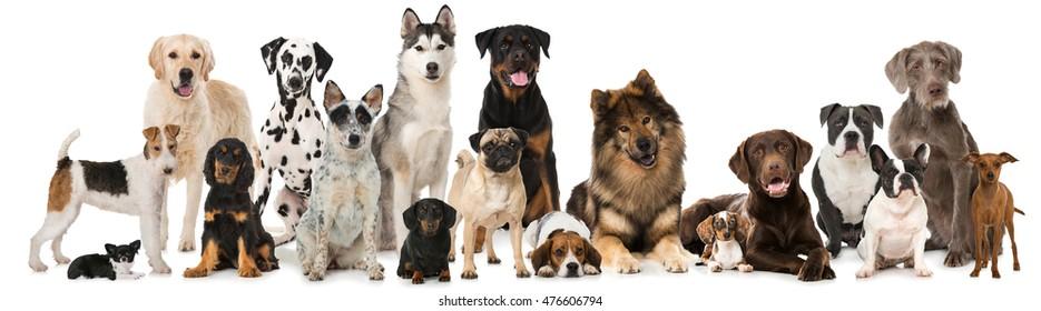 白で隔離される犬のグループ