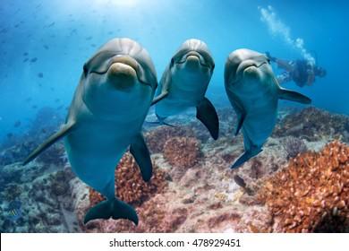 海からあなたを見ながら目のイルカの肖像画の詳細