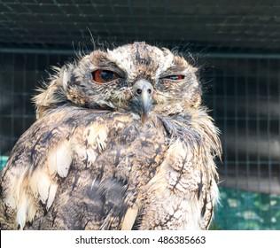 片目を開いた面白い眠そうなフクロウ。