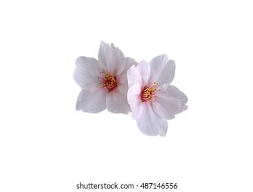 Weiße Blume auf einem weißen Hintergrund.