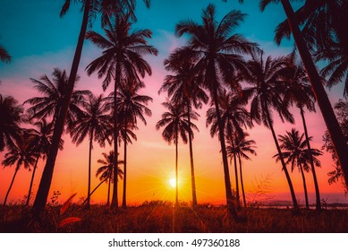 Silhouette Kokospalmen am Strand bei Sonnenuntergang. Vintage Ton.