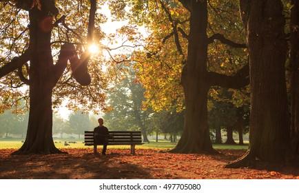晴れた秋の朝の公園のベンチに座っている男。
