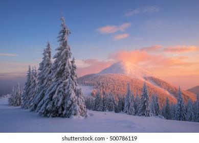 Kerstlandschap met sparren in de sneeuw. Winter in de bergen. Prachtige zonsondergang met rode wolken. Fantastisch uitzicht in het wild