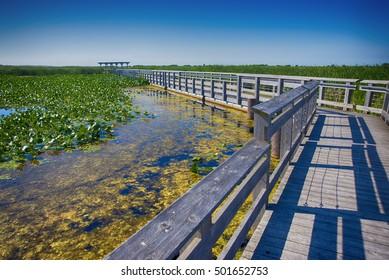 Point Pelee National Park Promenade im Sommer, Ontario, Kanada