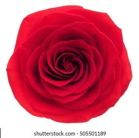 Red rose. Deep focus. No dust. No pollen.