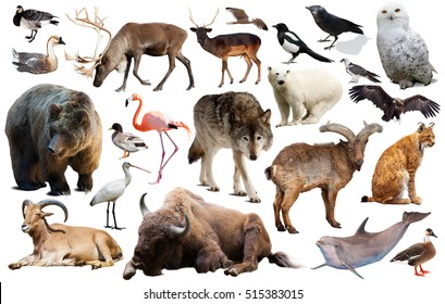 Set of bear and other european animals. Isolated on white background with shade