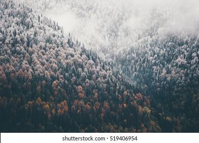 Foggy Autumn Coniferous Forest Landscape Luftbild Hintergrund Reisen Sie ruhige szenische Ansicht
