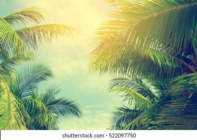 Palmen gegen blauen Himmel, Palmen an der tropischen Küste, Weinlese getönt und stilisiert, Kokosnussbaum, Sommerbaum, Retro