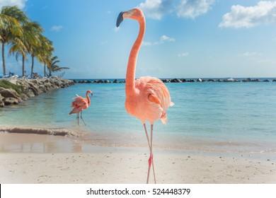 Drei Flamingos am Strand