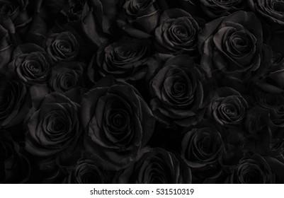 Hintergrund der dunklen Rosen. Grußkarte mit einer Luxusrosen