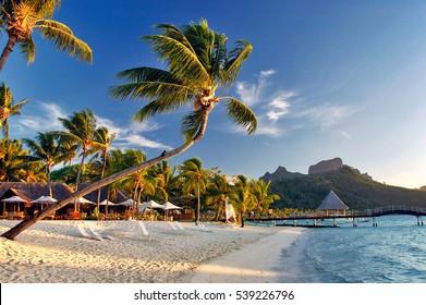 Hermoso amanecer al atardecer de Bora Bora en la playa, con palmeras, fondo de montañas