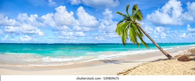Kokospalme auf weißem Sandstrand in Punta Cana, Dominikanische Republik. Panoramablick.