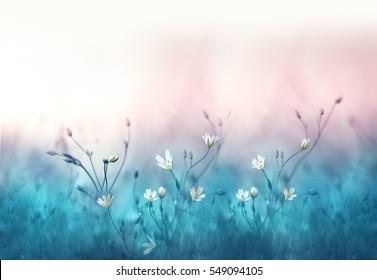 Pequeñas flores blancas en un tono sobre fondo azul y rosa suave suave al aire libre en primer plano macro. Fondo floral de plantilla de frontera de primavera verano. Imagen artística delicada de aire ligero, espacio libre.