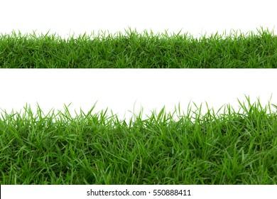 Hierba aislada sobre fondo blanco.