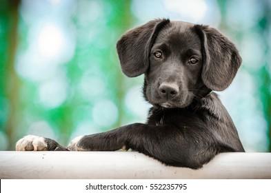 cute puppy as a model