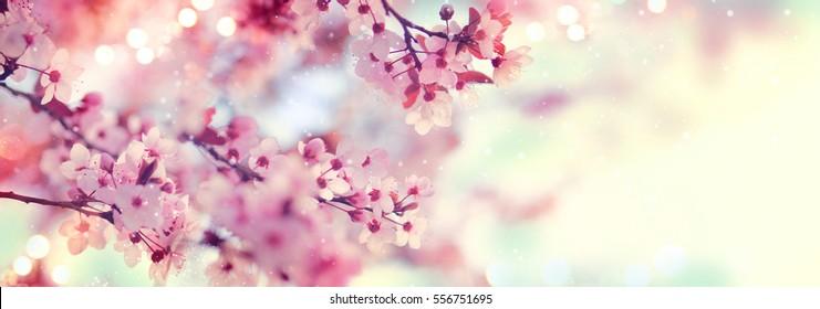 Frühlingsgrenze oder Hintergrundkunst mit rosa Blüte. Schöne Naturszene mit blühendem Baum und Sonneneruption. Ostern Sonniger Tag. Frühlingsblumen. Schöner Obstgarten abstrakter unscharfer Hintergrund. Frühling