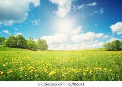 黄色いタンポポと青い空のフィールド