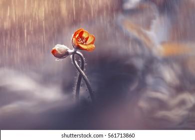 Flor tejida dos de la primavera en la lluvia en un bosque en primer de la primavera con el foco suave. La imagen romántica del amor, tarjeta de plantilla de borde de papel tapiz de primavera para diseño