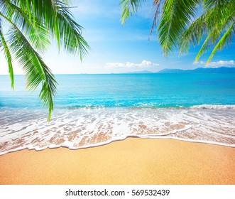 Palm y playa tropical