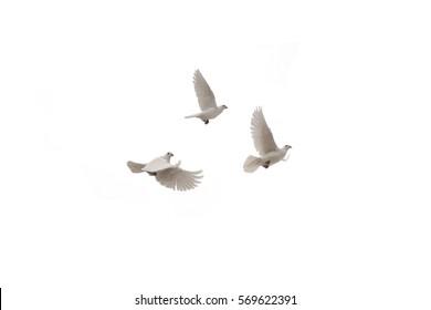 白い背景の上の3つの飛んでいる鳩