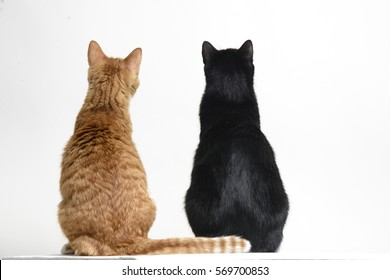 Two cats black and red back to camera on white background