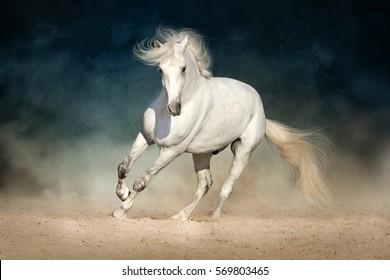 白い馬は暗い背景のほこりで前方に走ります
