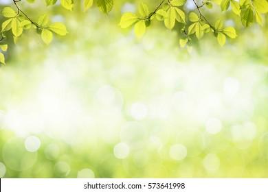 Frische grüne Baumblätter, Rahmen. Natürlicher Hintergrund.