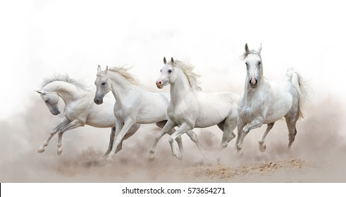 白い背景の上を走っている美しい白いアラビアの馬