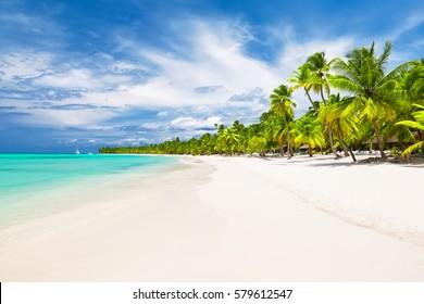 Kokospalmen auf weißem Sandstrand im karibischen Meer, Insel Saona. Dominikanische Republik