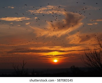 The bird flock on scarlet sunset background. Scenic purple sundown with clouds and birds.