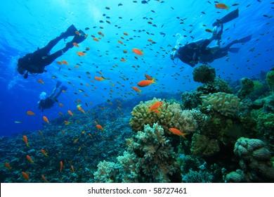 Buceo en un arrecife de coral con peces tropicales