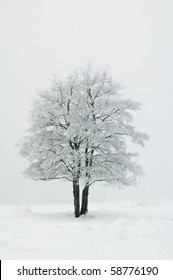 霧の中で霜で覆われた木