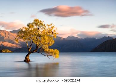 Mooie boom in Lake Wanaka, Nieuw-Zeeland.