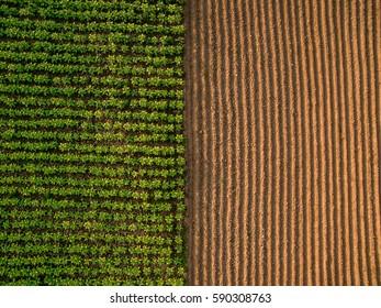 Vista aérea ; Hileras de suelo antes de plantar. Patrón de filas de surcos en un campo arado preparado para plantar cultivos en primavera. Vista horizontal en perspectiva.