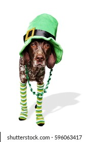 a dog wearing a funny St. Patrick's Day costume.