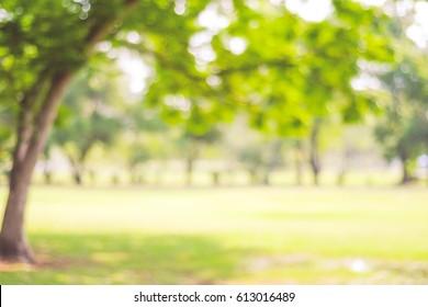 Unscharfer Parkgartenbaum im Naturhintergrund, verschwommenes grünes Bokehlicht im Freien im Sommerhintergrund