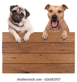 cute dogs, terrier and pug dog, hanging with paws on blank wooden promotional board sign, isolated on white background