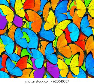 Beautiful mix colorful butterfly background.Colorful Mixed Butterflies Collage Pattern Background
