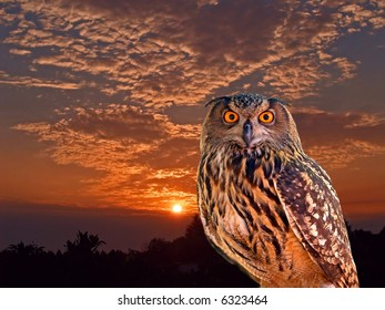an young owl at an early morning