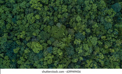 Luchtfoto bovenaanzicht bosboom, regenwoud ecosysteem en gezond milieu concept en achtergrond, textuur van groene boom boszicht van bovenaf.